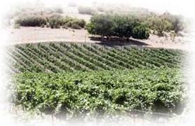 Se Acabaron las Catas de Vino Tipo «Sideways»