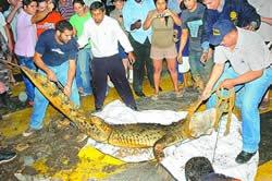 Tigres, Tiburones y Cocodrilos…Que  Pais!!!!