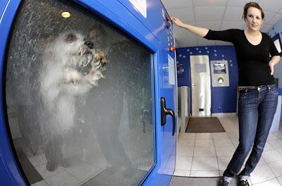 Aguanta, Aguanta, Aguanta!!!…Lavadora de Perros??