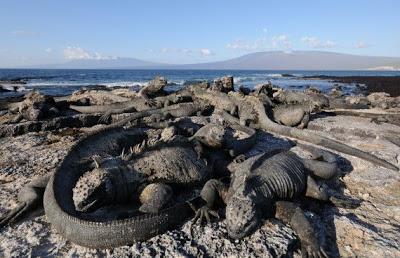 Galapagos Tendra Internet Gratis
