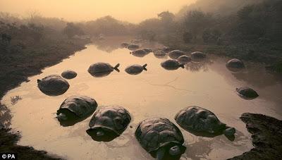 Foto de Galapagos entre las elegidas!!!
