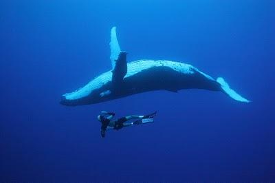 Un post de ballenas.