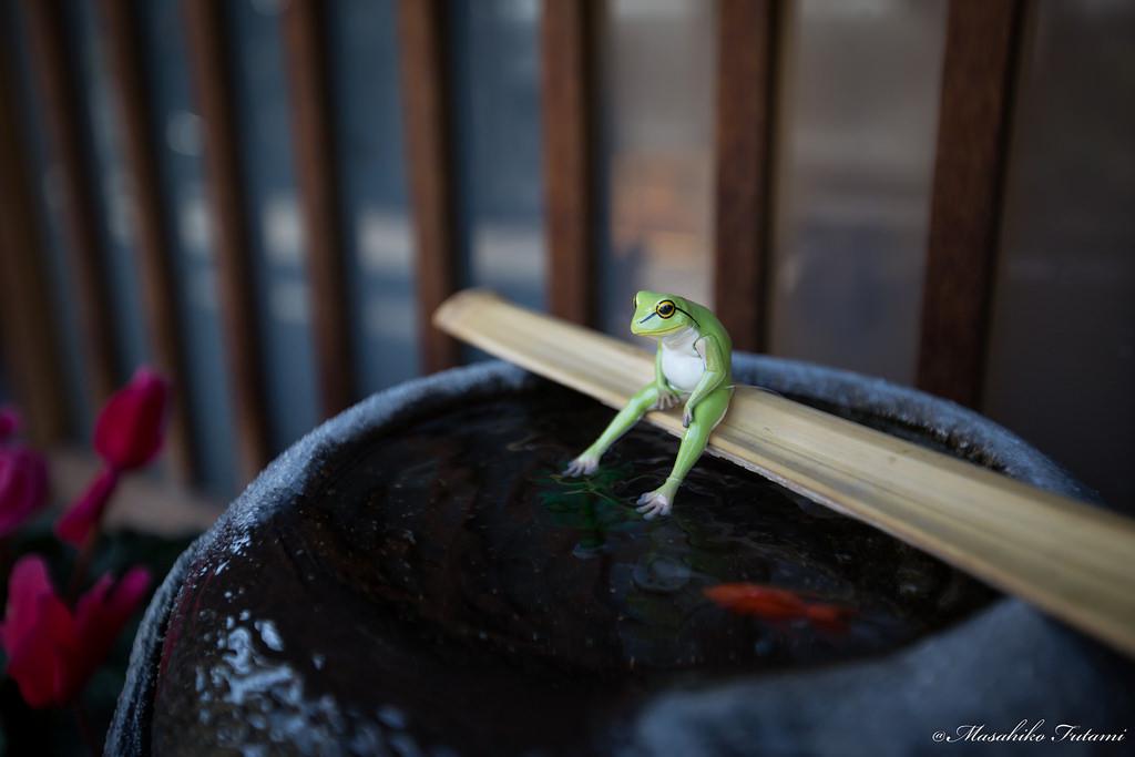 Im-on-break-now-Foto-de-Masahiko-Futami