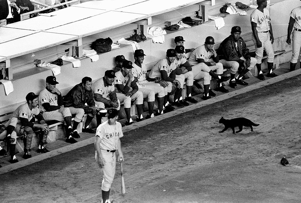 UNITED STATES - SEPTEMBER 08: Black cat stopped Mets game momentarily. Original 1969 caption below:Nobody we know would ever dream of claiming that luck has anything to do with the fact that our Mets are now only a half game behind the Cubs. Okay. So maybe a black cat walked onto the field to get acquainted with the Cubs and Leo Durocher [seated, 2nd from left]. Mets won 7-1 (Photo by John Duprey/NY Daily News Archive via Getty Images)