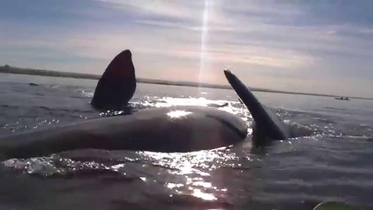 Embancado en la ballena