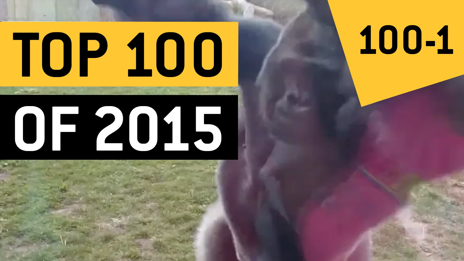 Los 100 video virales del año